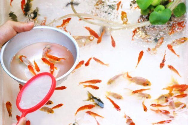 金魚を飼う前に準備する物