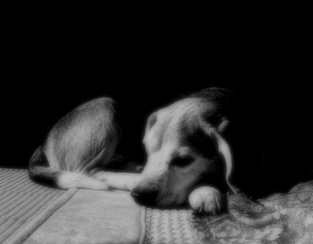 愛犬の老化のサインを読み取る方法