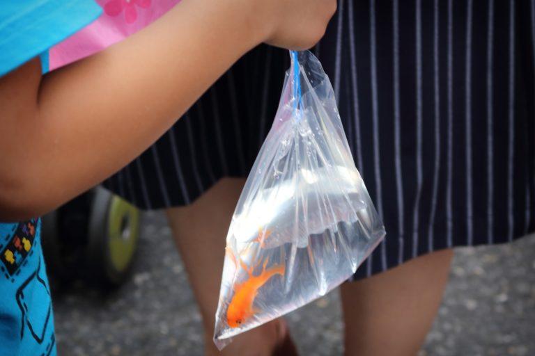 祭りで手に入れた金魚の運び方やその後