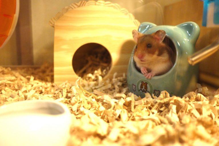 ハムスターの巣箱の種類とその選び方