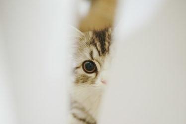 猫がトイレを我慢したり、トイレ以外の場所で排泄する