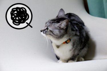 猫用トイレ以外での排泄はストレスがある場合