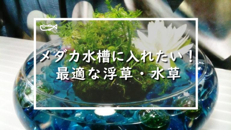 メダカ水槽に入れたい!最適な浮草・水草