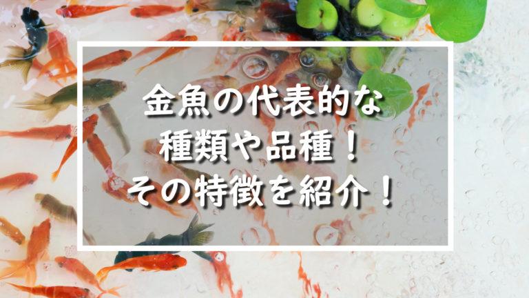 金魚の代表的な種類や品種。その特徴を紹介