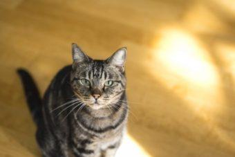 メダカの外敵である野良猫