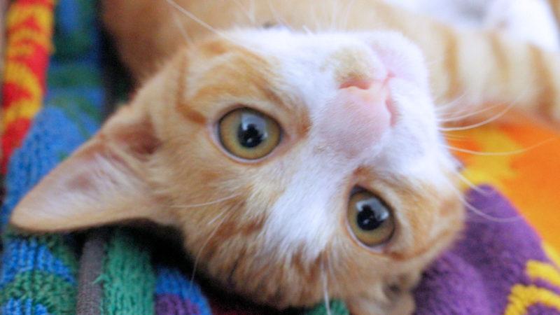 猫と暮らすこれからの人生を考える