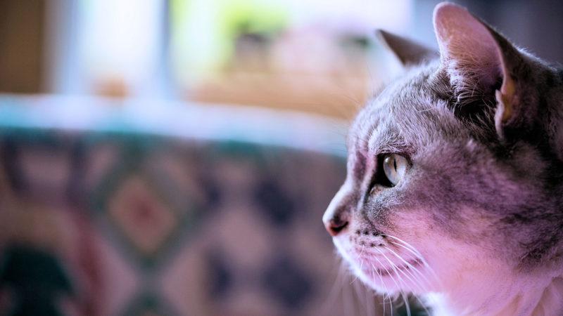 猫の迎え方の基本は?