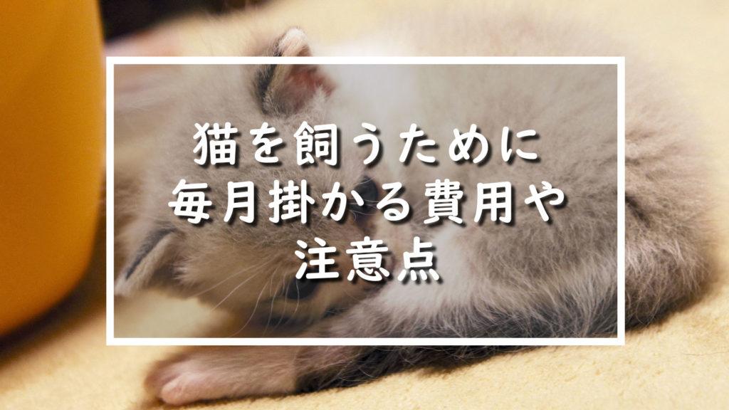 猫を飼うために毎月掛かる費用や注意点
