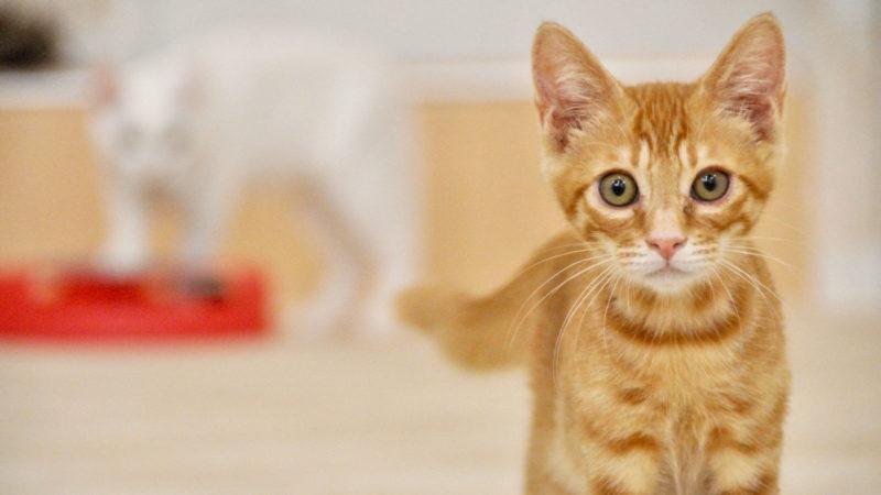 猫を飼うために月々必要な費用は結局いくら?