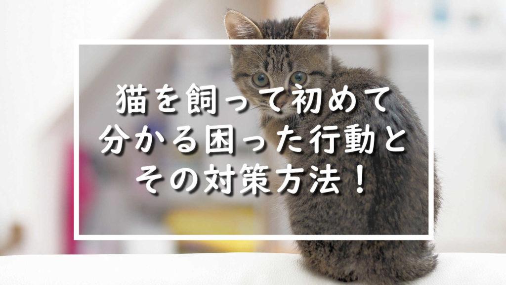 猫を飼って初めて分かる!困った行動とその対策方法!