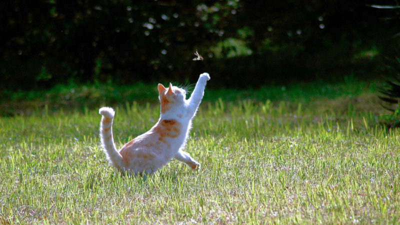 外で捕まえた動物を連れて帰ってきてびっくり!
