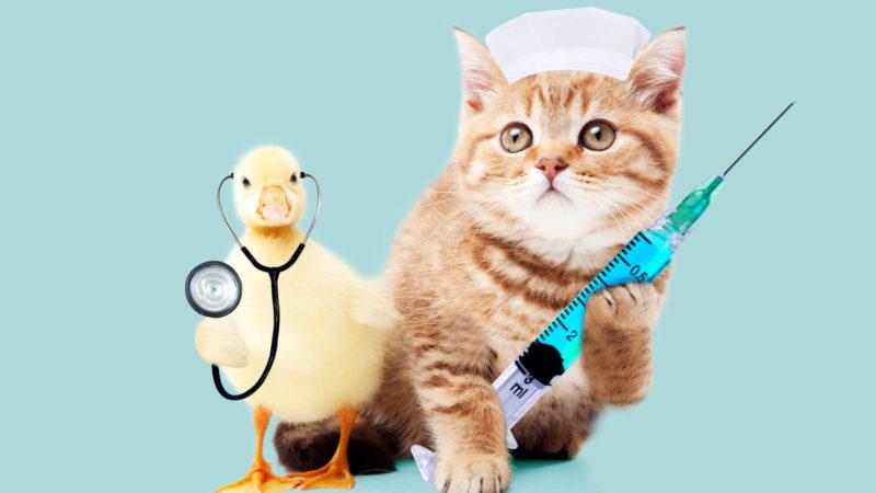諦めないでペットショップや動物病院などに相談しよう
