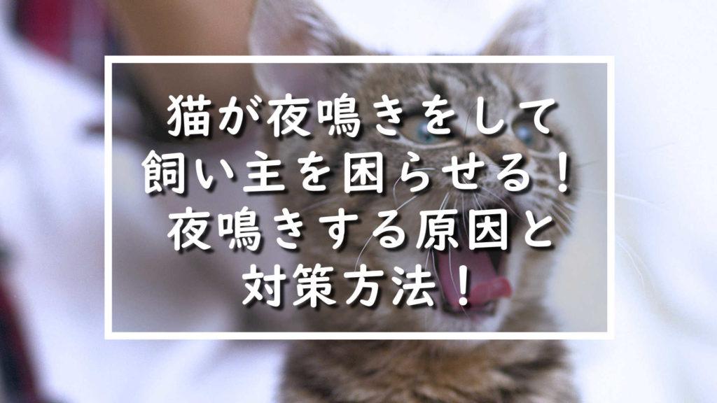 猫が夜鳴きをして飼い主を困らせる!夜鳴きする原因と対策方法!