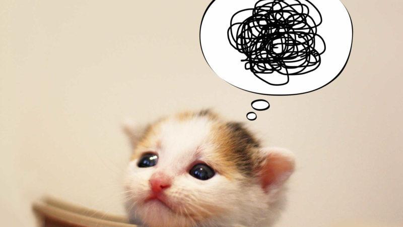 猫にとって、「何か不満がある」場合