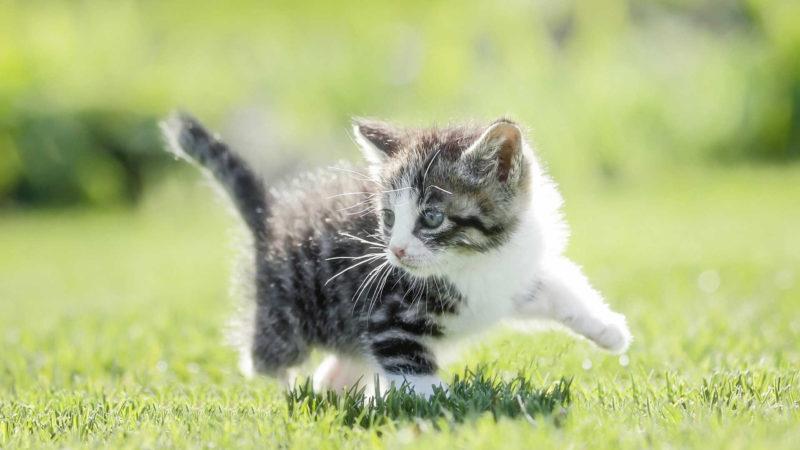 夜鳴きの理由と対策を知ることで、愛猫との信頼を育てよう
