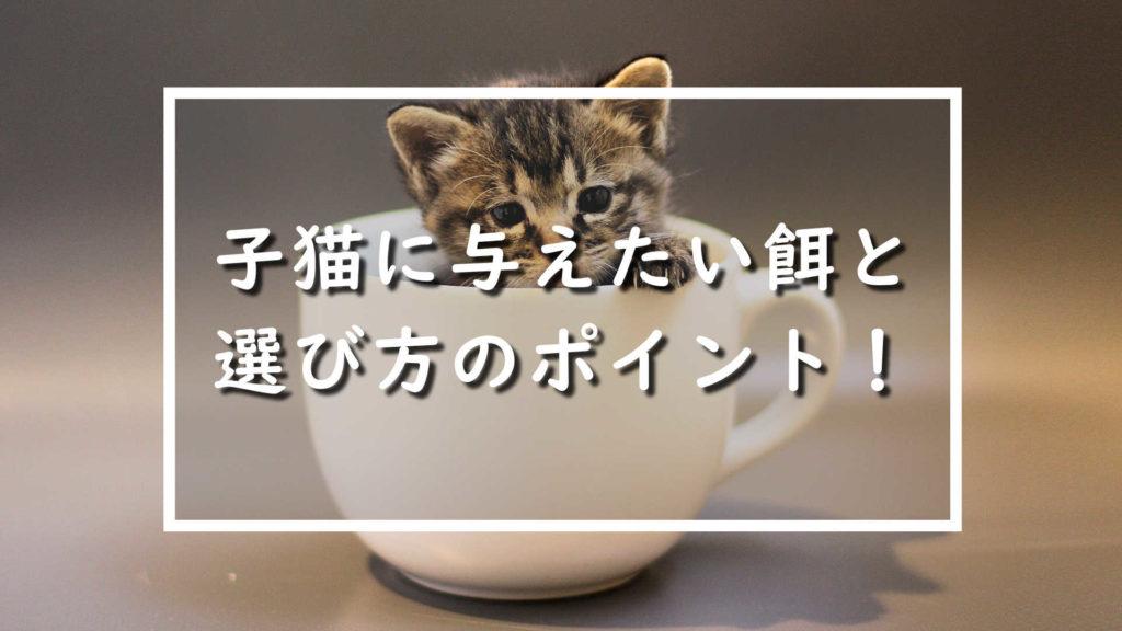 子猫に与えたい餌と選び方のポイント!