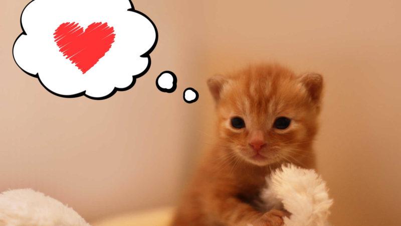 生後2ヵ月位まで子猫用のウエットフードを与える