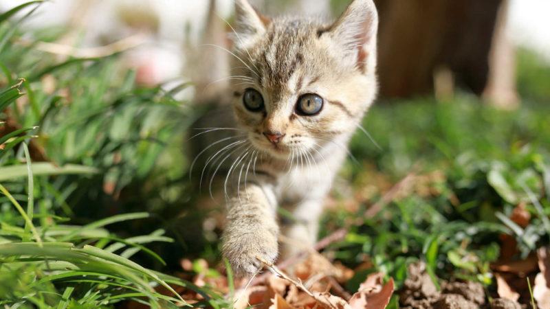 子猫用の餌は栄養が高い
